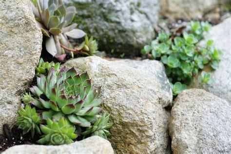Build A Rock Garden Build A Rock Garden In A Day