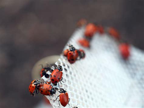 ladybug ladybug fly away home mellzah