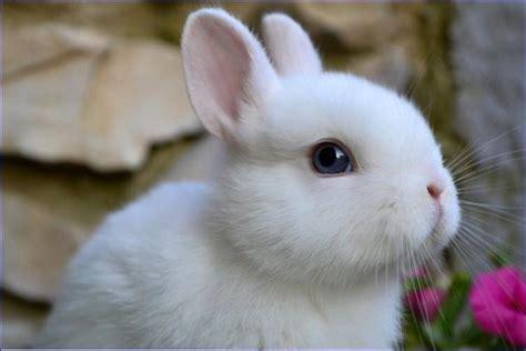coniglio testa di coniglio testa di idee green