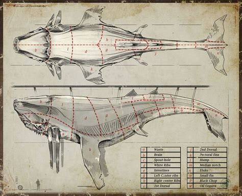 whale diagram whale diagram dishonored whales