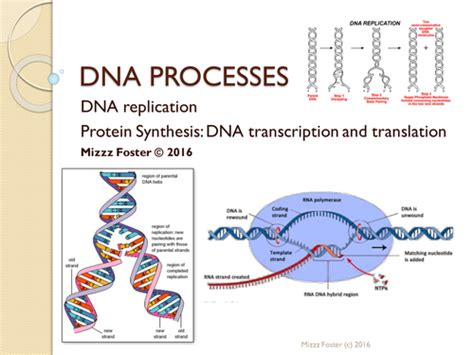 protein 7 synthesis buy dna processes bundle dna replication and protein