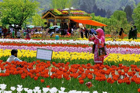 Amsterdam Flower Garden Is This Srinagar Or Amsterdam Largest Tulip Garden In Asia Dazzles Onlookers With 1 5 Million