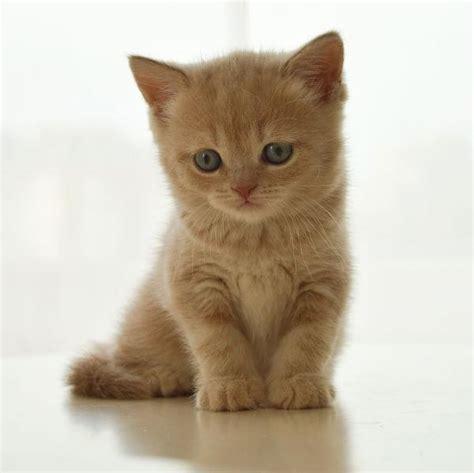 imagenes de jardines con gatos cuidados de gatos cachorros