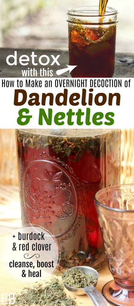 Detox Drinks Dandelion by Overnight Decoction Of Dandelion And Nettles Iced Healing