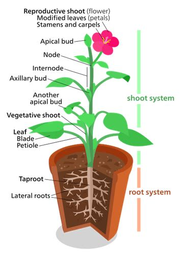 new year animals every year plant shoot system structure function lesson