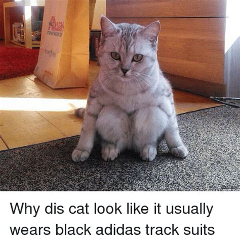 Cat Suit Meme - 25 best memes about adidas and cats adidas and cats memes