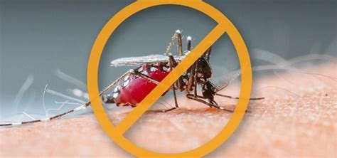 how to repel mosquitoes naturally using just plants oils
