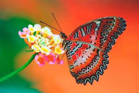 imagenes de vomitando mariposas 191 qu 233 comen las mariposas