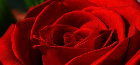 valentines day oxford valentines day oxford bar and buffer restaurant the