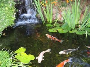 diy koi fish pond ideas for the home pinterest