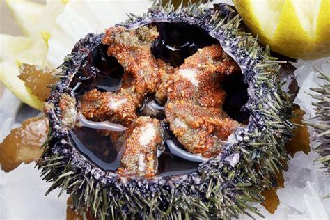 oursin cuisine les oursins ce plat m 233 connu fish fiches
