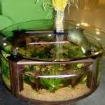 Cheap Aquarium Coffee Table How To Make A Coffee Table Aquarium Coffee Table Design Ideas