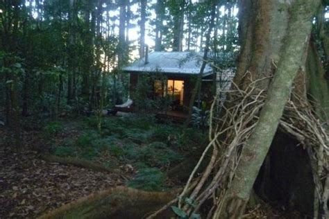 Bunya Mountains Cabins Cottages by Standing In The Rainforest The Cabin Picture Of