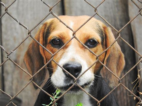 puppy nyc nyc laws aimed at sting out puppy mills upheld