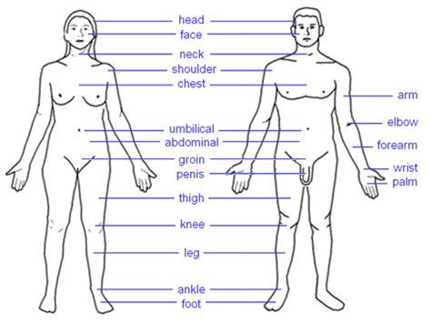human sexual diagram the most wonderful creature human pictures images