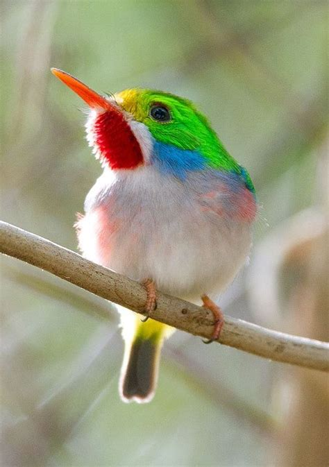 can i install hummingbird flying on a christmas tree 17 best images about hummingbird don t fly away on birds south america and wisteria
