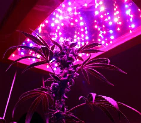 led grow lights make growing marijuana easy or do they