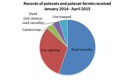 Types Of Records National Polecat Survey Update The Vincent Wildlife Trust