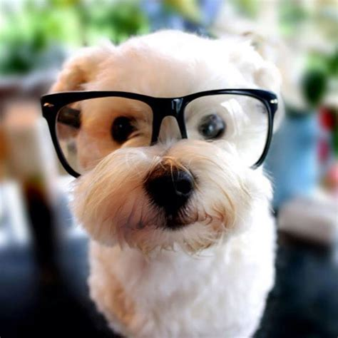puppy with glasses look these s are wearing glasses they suit them 14 incredibly pictures