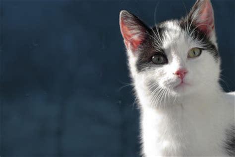 katze pinkelt in die wohnung katze pinkelt in die wohnung so entfernen sie den geruch