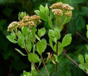 tumbuhan  bermanfaat bagi manusia dosenbiologicom