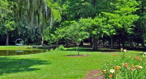 Edisto Gardens by Charleston Currents History Edisto Memorial Gardens