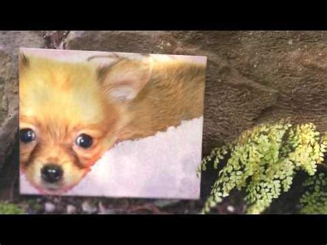 westchester puppies and kittens westchester puppies and kittens 360p kittens
