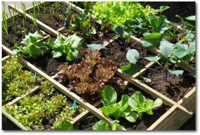Intensive Gardening Layout Small Vegetable Garden Plans And Ideas