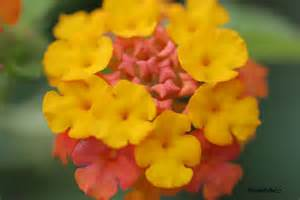 Which Is The Smallest Flower - wild animals and flowers we ve seen in the philippines