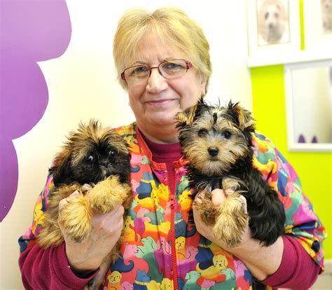 pet stores in maine that sell puppies bill calls for ban on sales of dogs cats in maine pet stores the portland press