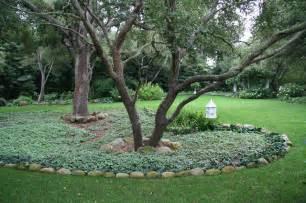 Oaks with Dead Nettle   Traditional   Landscape   Santa Barbara   by Donna Lynn   Landscape Designer