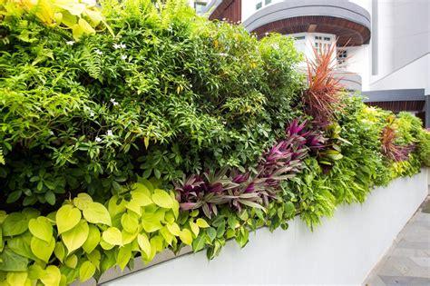 hygrowall vertical green wall vertical green pte