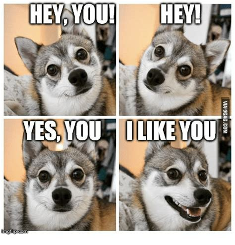 i like you meme i like you animal meme www pixshark images