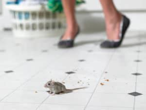 how to get rid of mice in kitchen cabinets how to get rid of mice in the kitchen earthkind