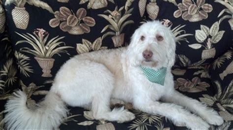 molly s place rescue pet mechanicsburg pa