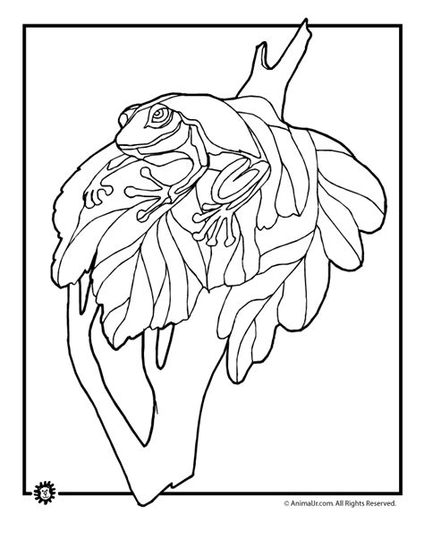 rainforest frog coloring page rainforest plants and animals drawings
