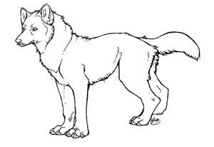 Outlines Of Wolves wolf outline and coloring picture