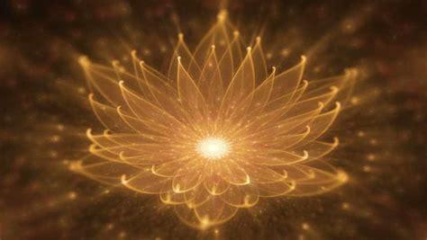 il fiore libro il segreto fiore d oro libro