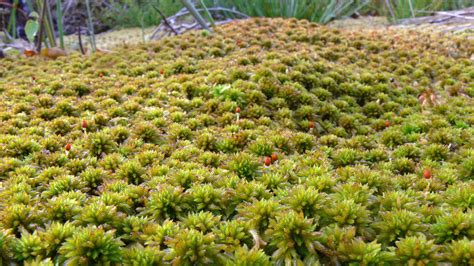 Sphagnum Moss related keywords suggestions for sphagnum