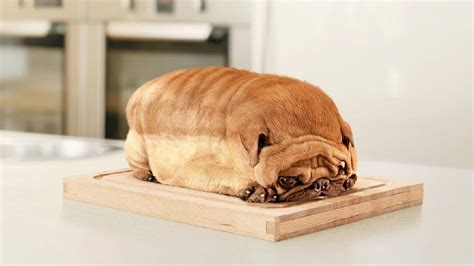 bread puppies this pug who is bread photoshopbattles