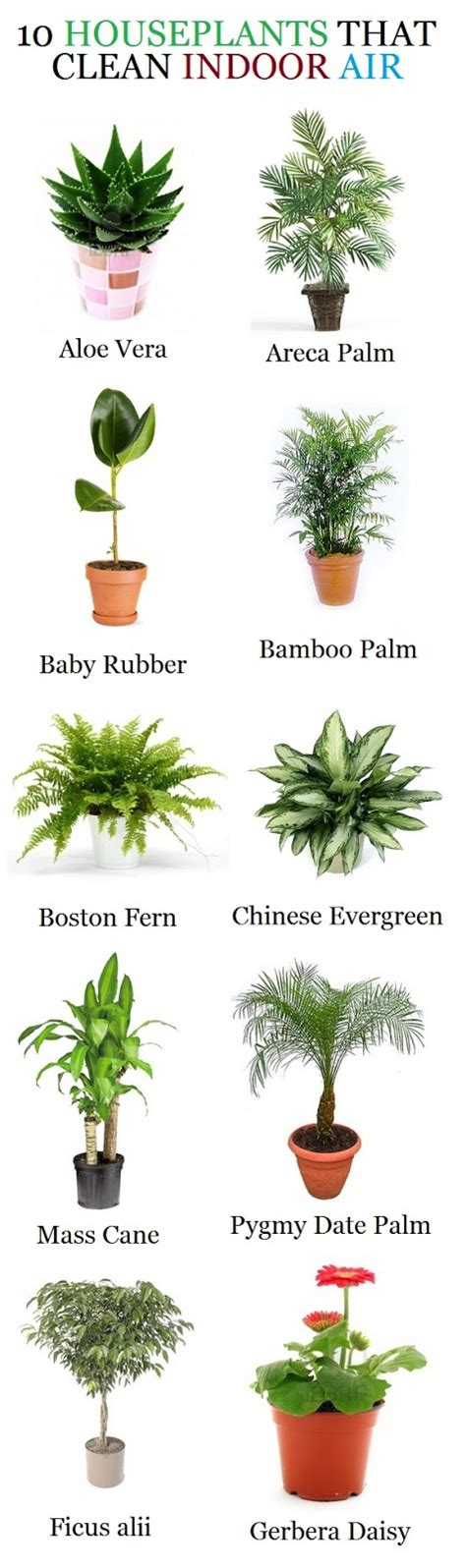 indoor plants to clean air 10 houseplants that clean indoor air beautiful home and