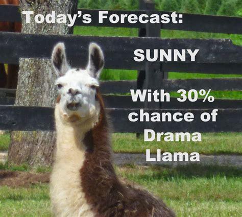 Drama Llama Meme - danisnotfire drama llama thinglink