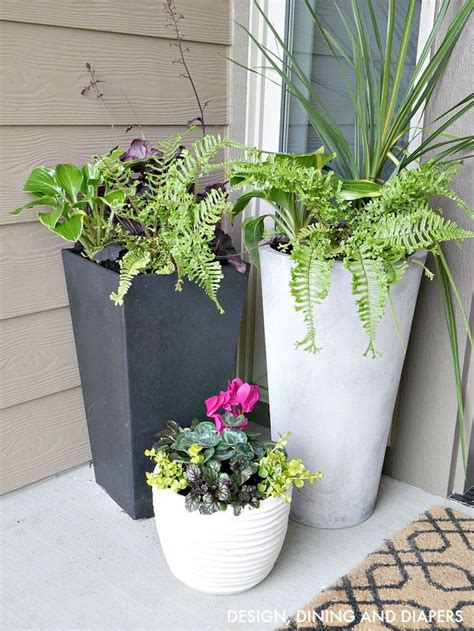 Front Door Potted Plants 25 Best Ideas About Front Porch Planters On Potted Plants Flower Pots And Front