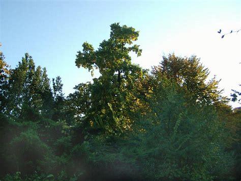 alter botanischer garten marburg freundeskreis alter botanischer garten marburg