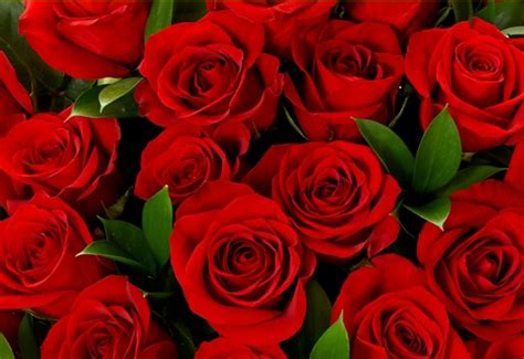 %name Different Color Roses   Heirloom Roses   Heirloom Roses