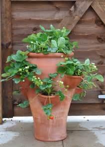 buy terracotta strawberry planter
