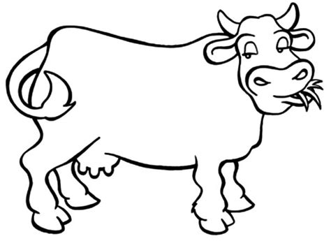 dairy cow coloring page dairy cow netart