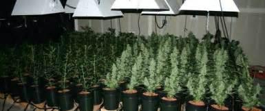 autoflowering beleuchtung beleuchtungsdauer autoflowering und geeignete led grow le
