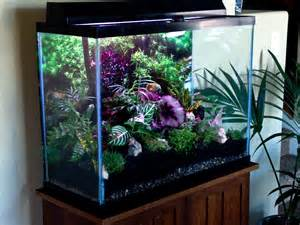 turned my 50 gal aquarium into a terrarium creative things for the home pinterest