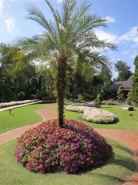 30 spectacular backyard palm tree ideas home stratosphere